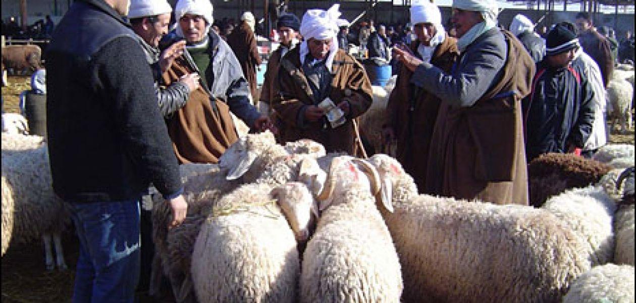 Aïd el Adha – mardi 16 novembre 2010.
